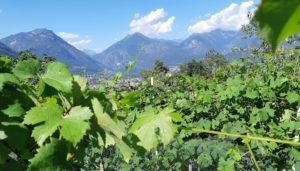 Le valli dell'Ossola viste dal vigneto